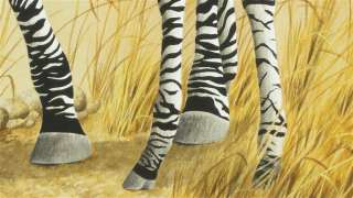 Stephen GAYFORD, Zebra and Foal, ORIGINAL watercolour, large, HIGHLY