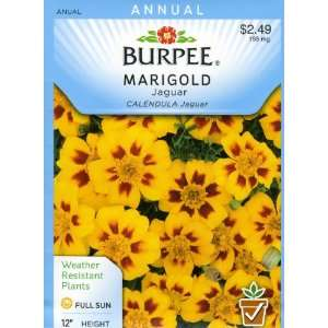 Burpee 33227 Marigold, French Jaguar Seed Packet Patio