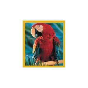 New Magnetic Bookmark Macaw Red Scarlet Macaw High Quality