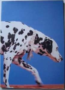 Pet Shop Boys 1989 Britain Asia Tour Book Program EC