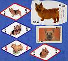 selection of norwich terrier dog playing swap cards singles