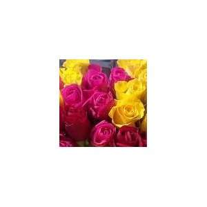 200 Premium Long Stem Roses assorted colors Patio, Lawn