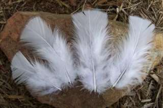 60 TURKEY PLUMAGE FEATHERS 3 5 BRIGHT WHITE COLOR~NICE