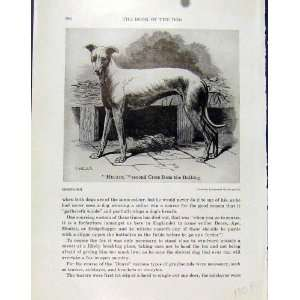Hecate Bulldog Cross Old Print C1940 Fine Art Dog Hound
