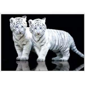 Poster mit Rahmen 61 x 91,5 cm, Weiß   Tiger Cubs gerahmt