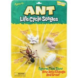 Ant Life Cycle Stages: Office Products