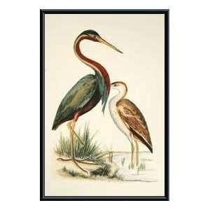 Birds III   Artist: H.L. Meyer  Poster Size: 28 X 18: Home & Kitchen