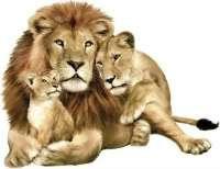 Rainforest Safari Animal Peel & Stick Mural Easily Removable